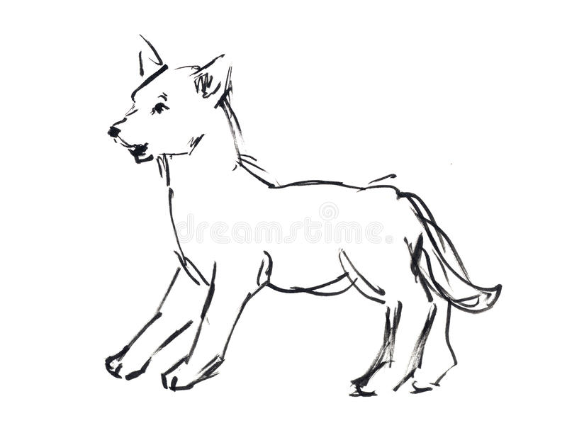 Puppy. A puppy wolf on the white background royalty free illustration