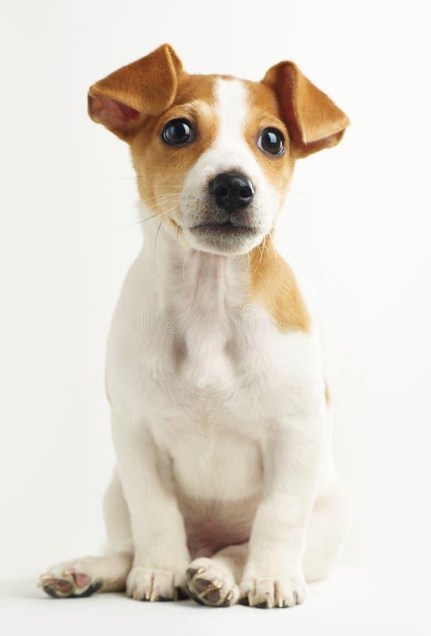 Free Puppy Royalty Free Stock Photos - 11938188