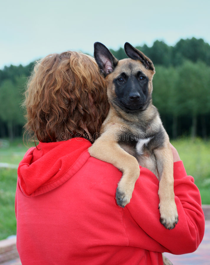 Download Puppy stock photo. Image of watching, tyke, protector, woman - 169530