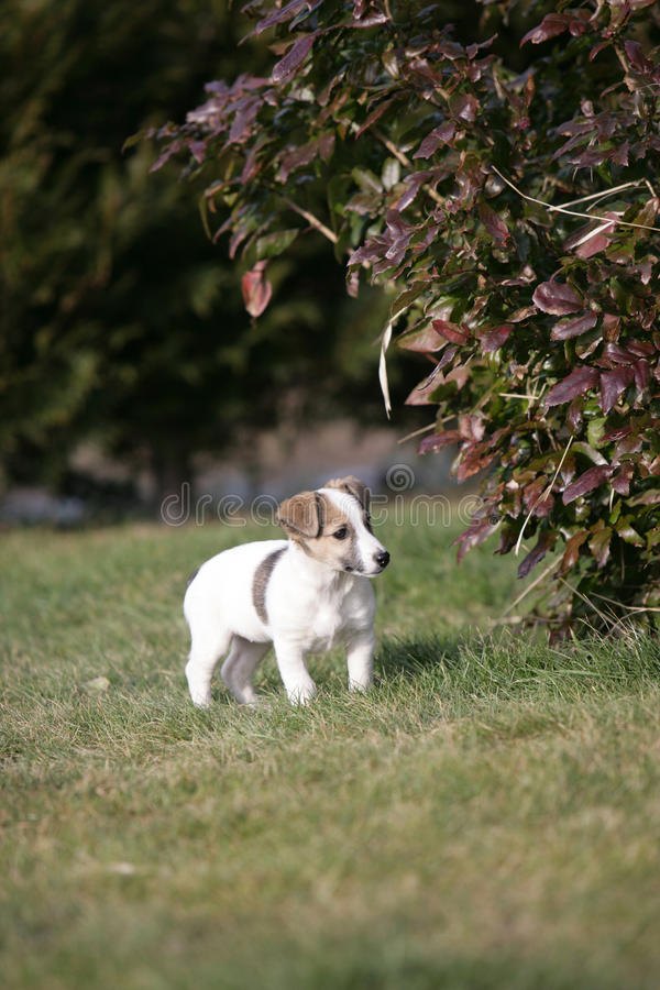 Download Puppy stock photo. Image of love, hairy, dressage, hair - 18327664