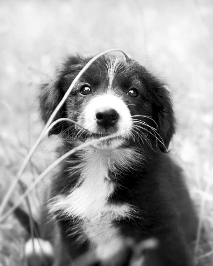 Download The Puppy 1969 stock photo. Image of mutt, animal, comical - 5587766