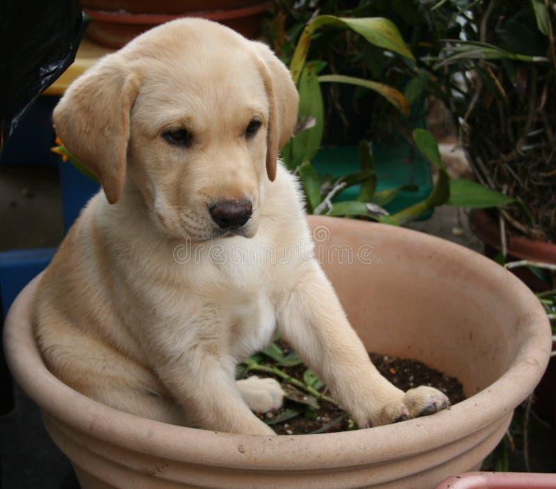 Puppy stock foto