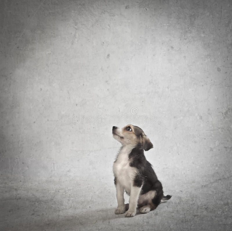 Download Puppy Royalty Free Stock Photo - Image: 28041645