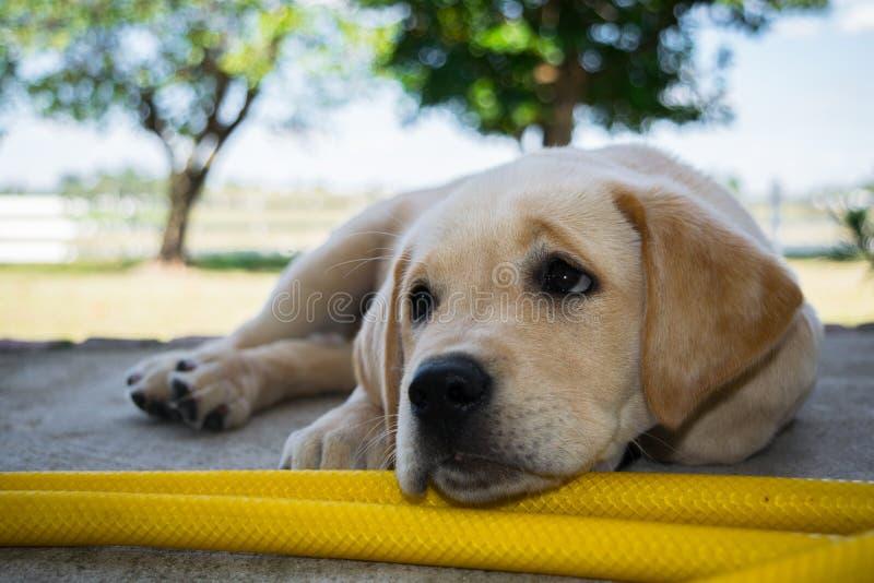 Puppy royalty-vrije stock afbeelding