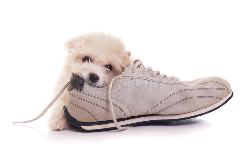 Download Puppy Royalty Free Stock Images - Image: 7261129