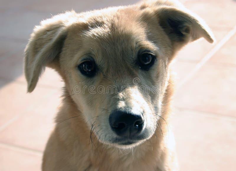 Puppy Royalty-vrije Stock Foto