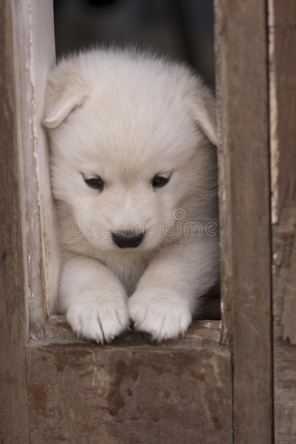 Download Puppy stock photo. Image of dogs, happy, friends, green - 9737604
