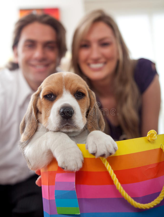 Download Puppy as a gift stock photo. Image of happiness, anniversary - 9610764