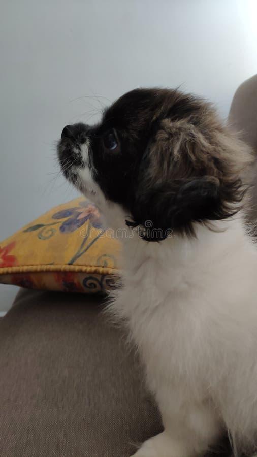 Puppy& x27; atención de s fotografía de archivo