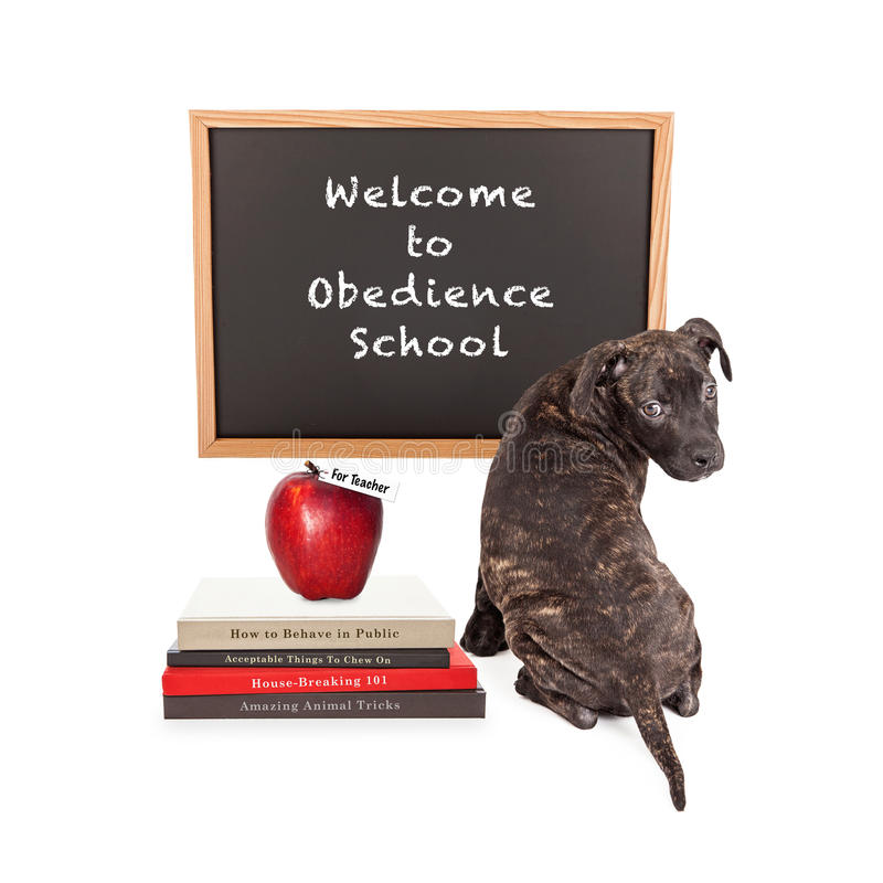 Puppy Attending Obedience School. Cute puppy in front of a chalk board that reads Welcome to Obedience School with a pile of dog training books and an apple for stock photography