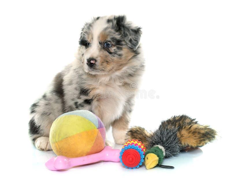 Puppy Australisch herder en speelgoed stock foto