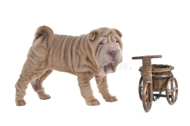 Download Puppy and Basket stock photo. Image of transportation - 14857440