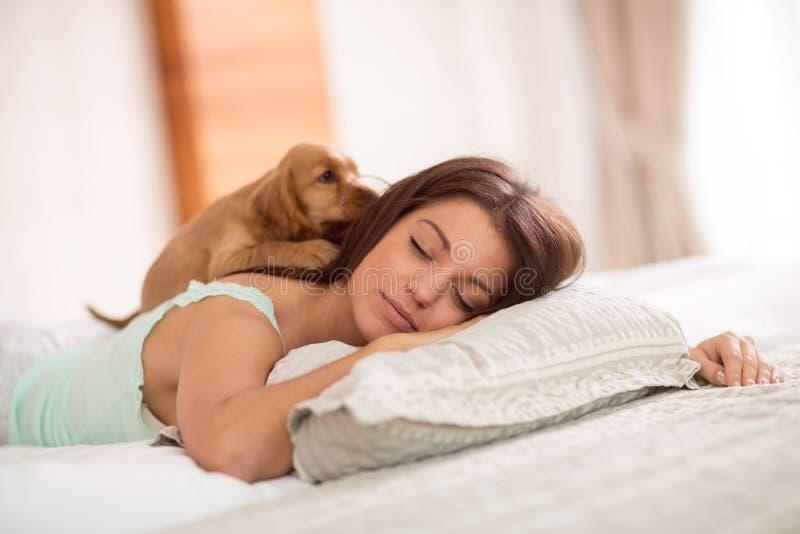 Puppy in bedkielzog omhoog zijn maitresse stock afbeeldingen