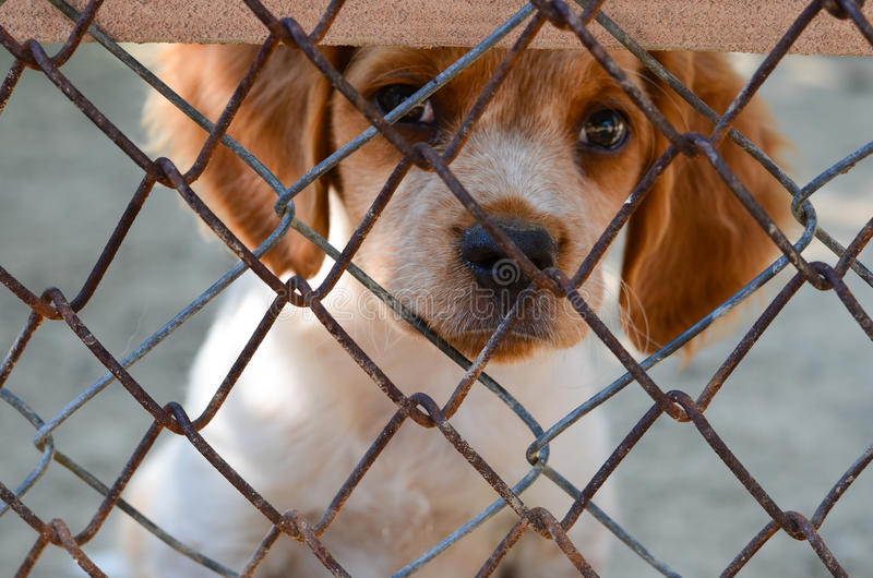 Puppy behind a fence. stock photography