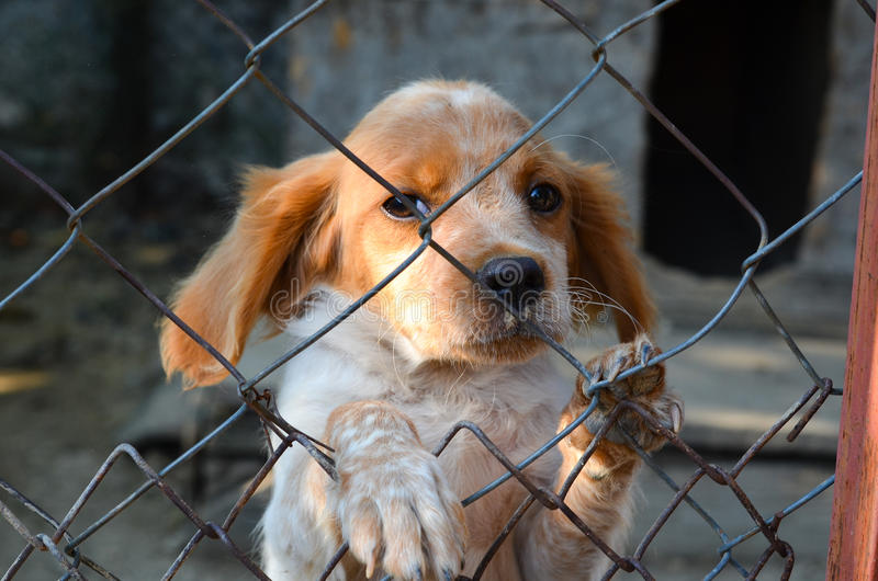 Puppy behind a fence. stock image