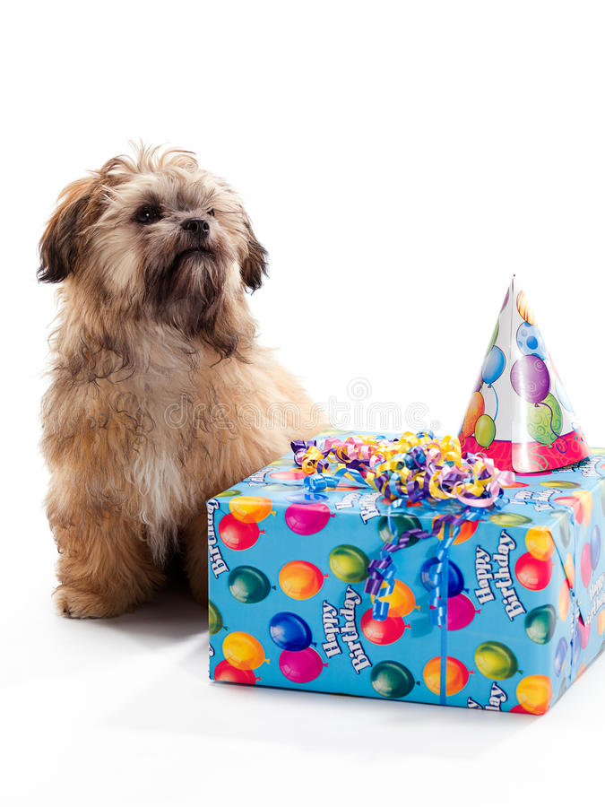 Puppy Birthday Party royalty free stock photography