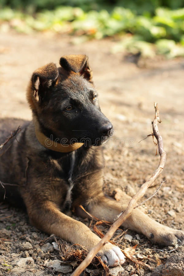 Puppy with a branch stock photos