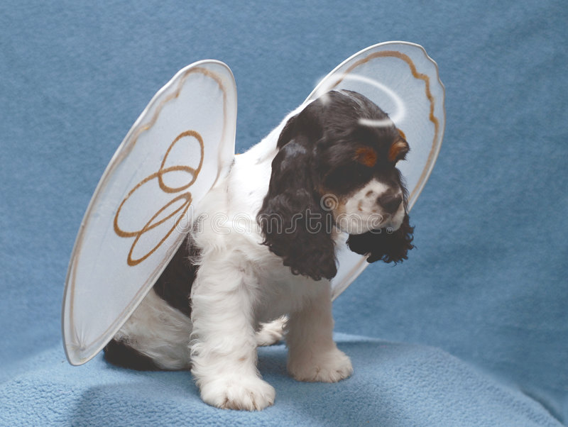 Puppy with broken halo royalty free stock photos