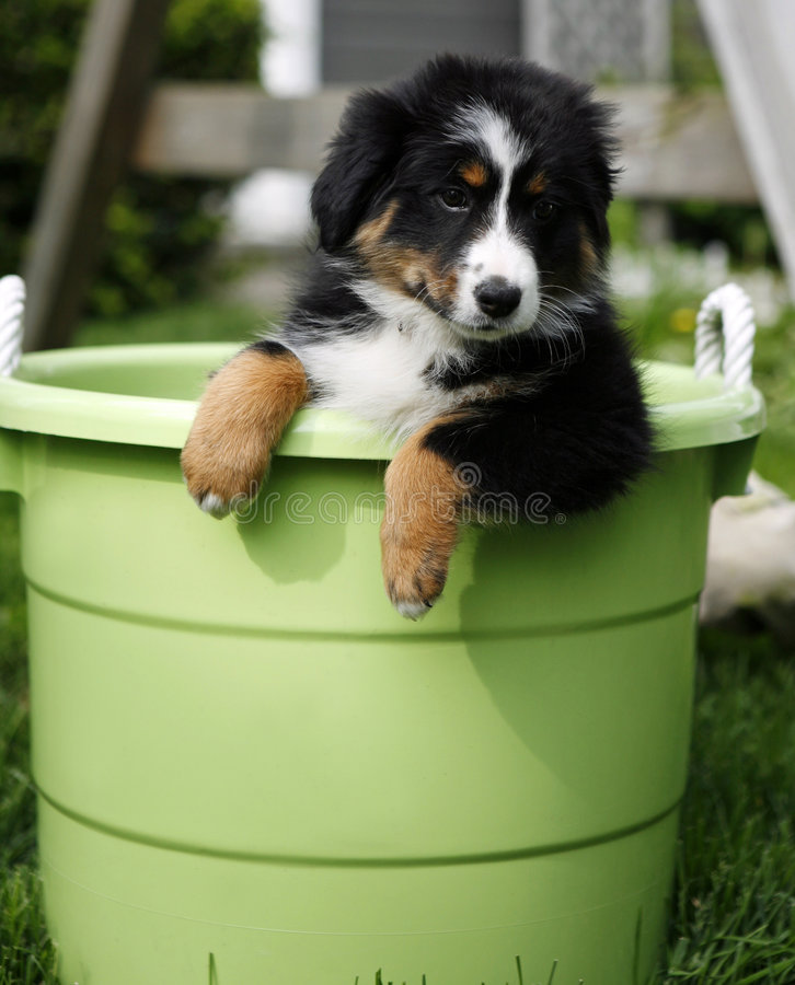 Puppy in bucket royalty free stock photo