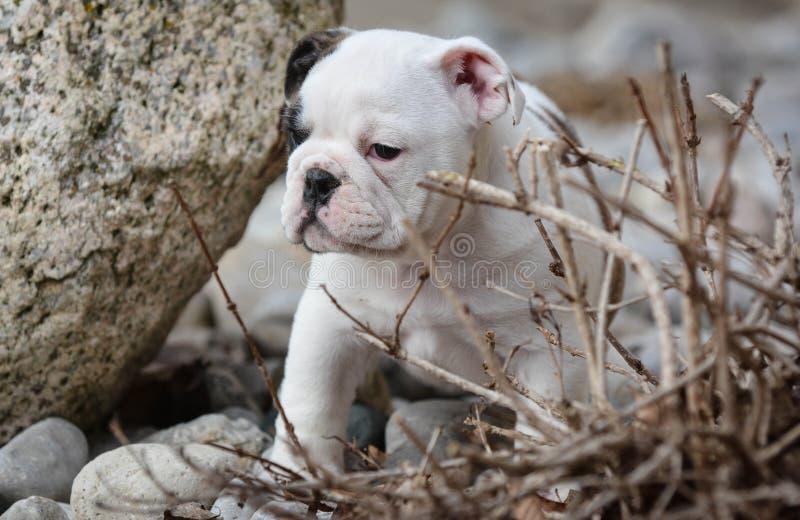 Puppy buiten royalty-vrije stock foto