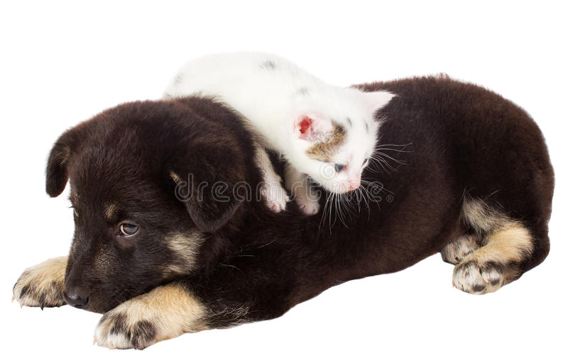 Download Puppy and cat stock photo. Image of black, head, image - 23160166