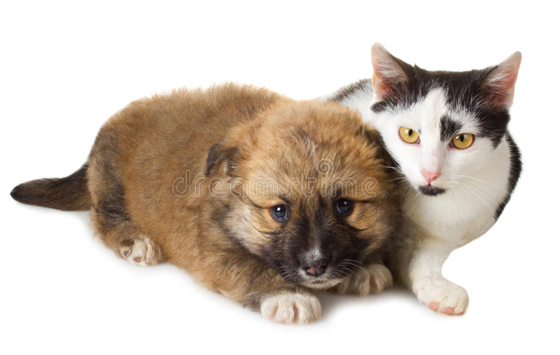 Download Puppy and cat stock image. Image of buddy, friendship - 27461953