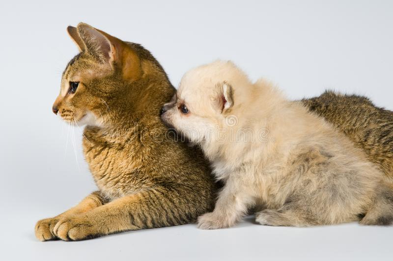 The puppy with a cat stock photos
