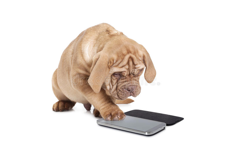 Puppy with cellular phone royalty free stock photos
