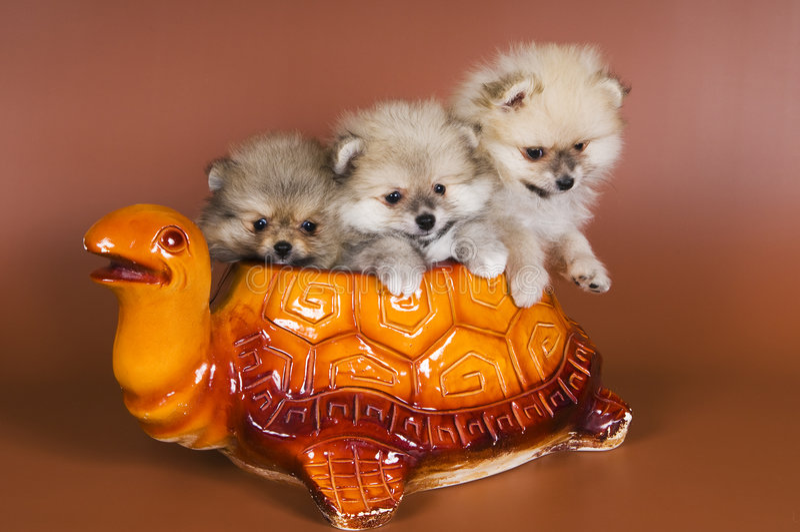 Puppy in ceramische pot royalty-vrije stock foto's