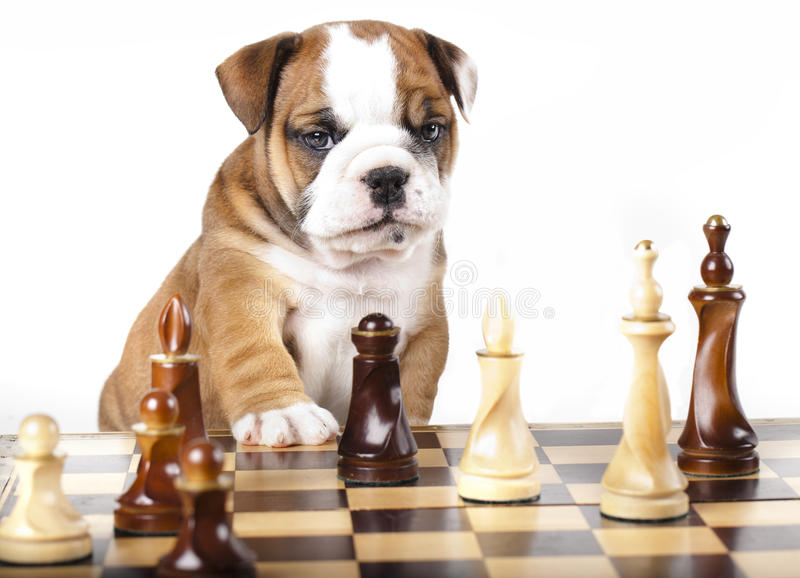 Puppy And Chess Piece Stock Photo