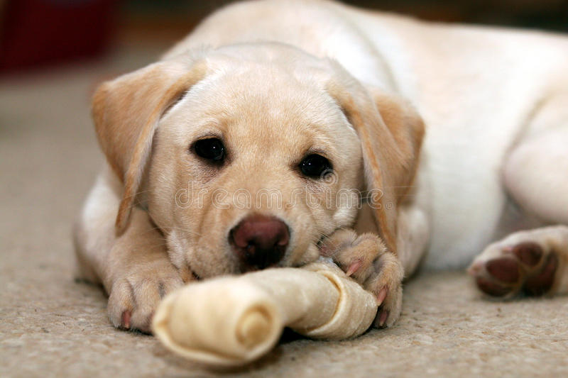 Puppy and Chew Toy