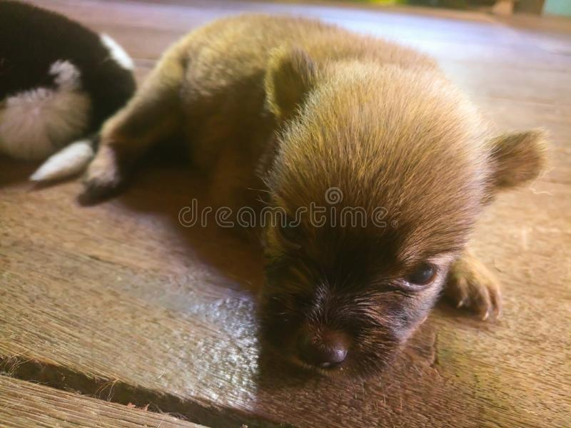 Puppy child at home stock images