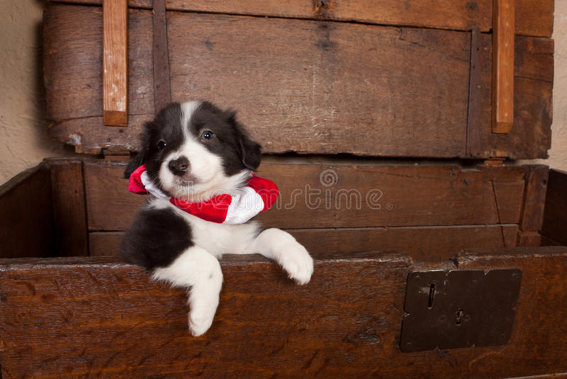 Puppy with christmas stock images