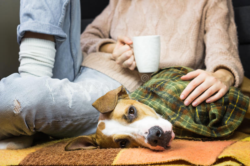 Puppy covered in plaid relaxing with human royalty free stock photos