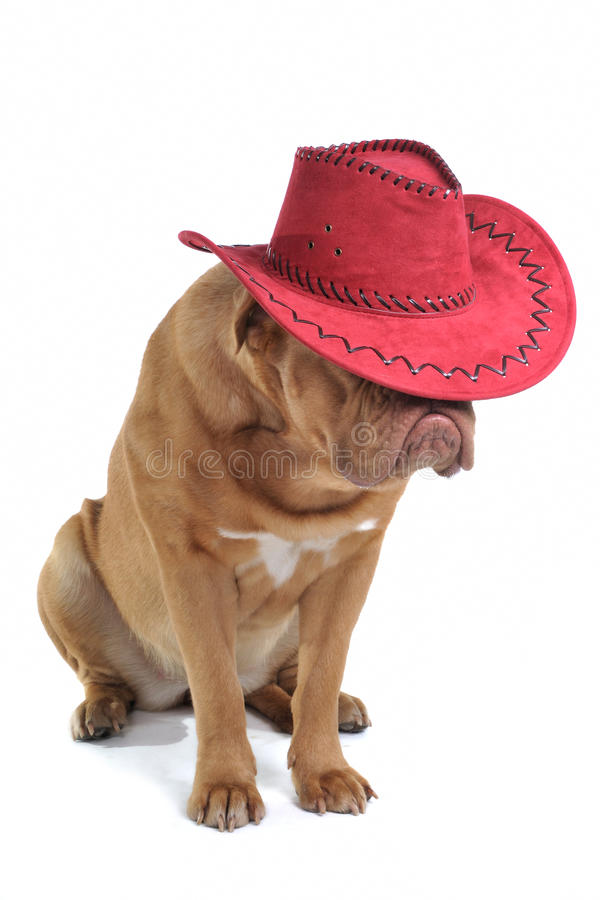 Puppy in Cowboy Hat stock image
