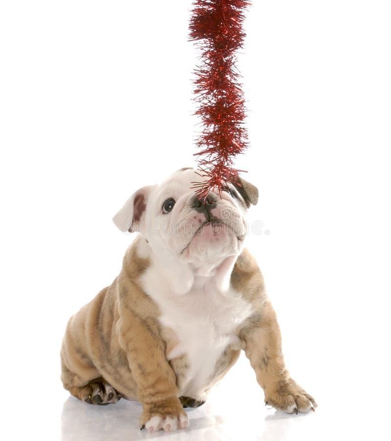 Puppy dat op Kerstmisslinger trekt aan stock foto's