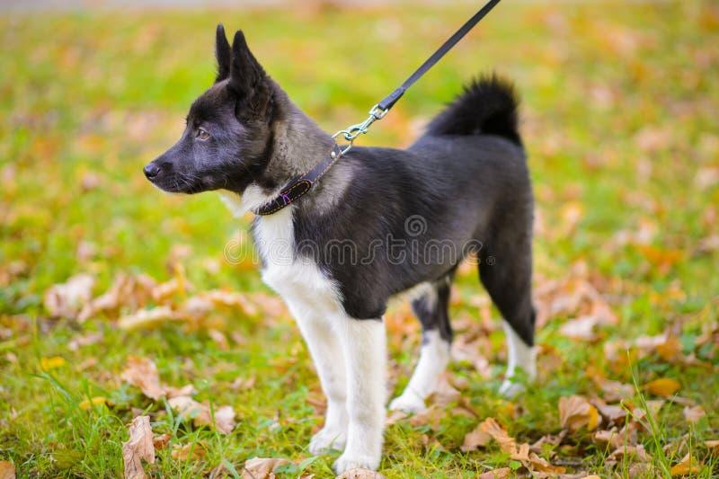 Puppy in de herfstbladeren royalty-vrije stock foto's