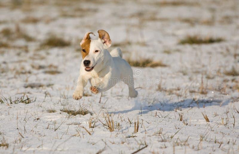 Puppy in de sneeuw stock fotografie