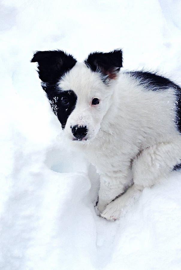 Puppy in de sneeuw royalty-vrije stock foto's
