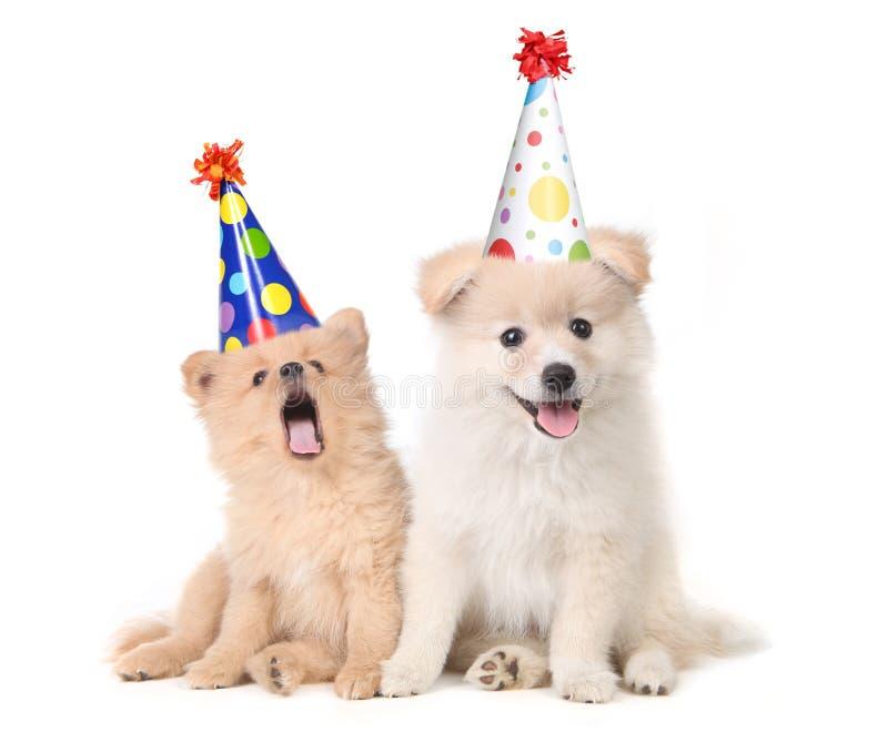Puppy die een Verjaardag vieren door Te zingen royalty-vrije stock fotografie