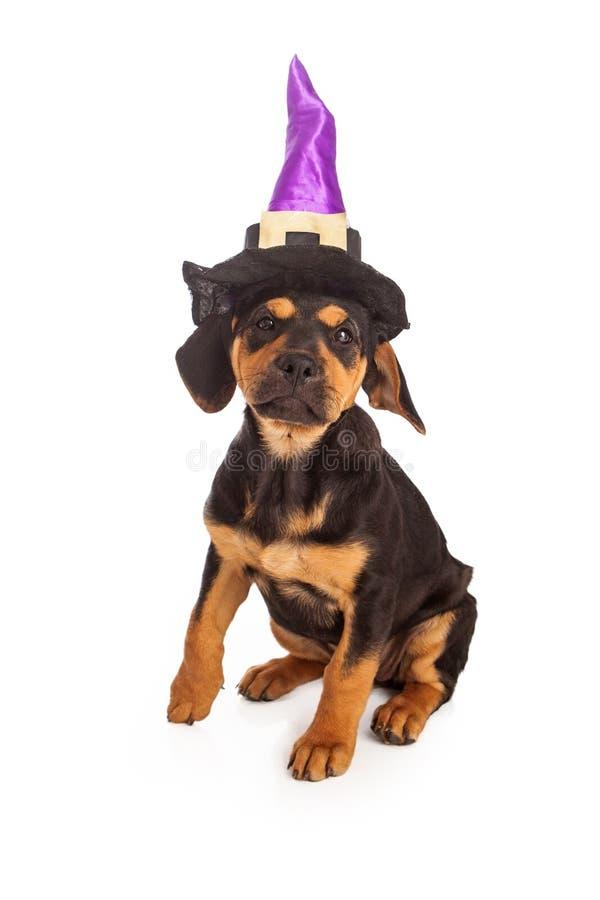 Puppy die Halloween-Heksenhoed dragen stock fotografie