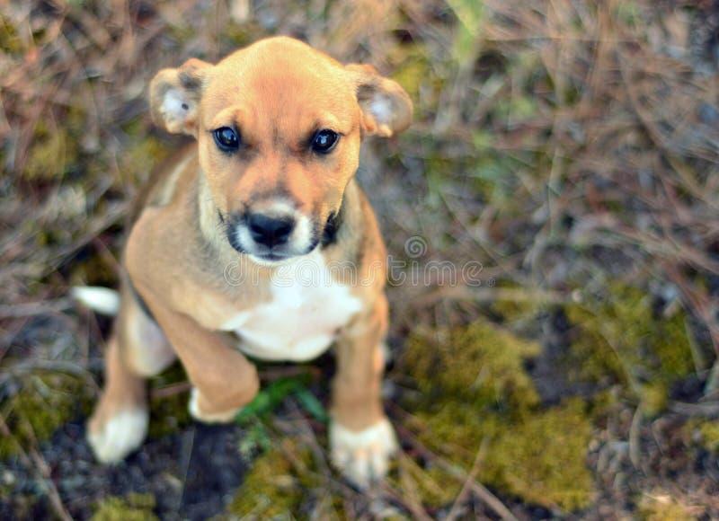 Puppy die met leuke ogen bedelen stock foto's