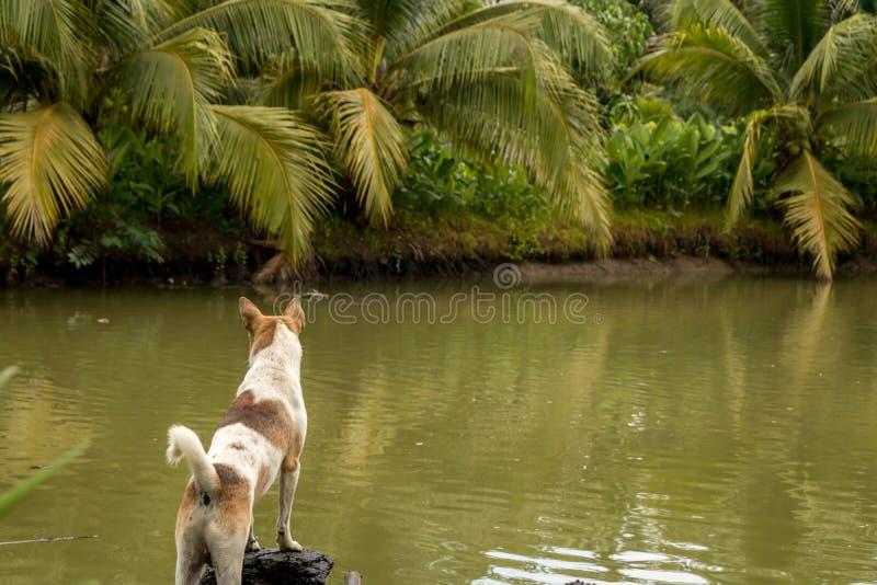 Puppy die zich door Groene Vijver met Kokospalmen en Tropische Installaties bevinden stock foto's