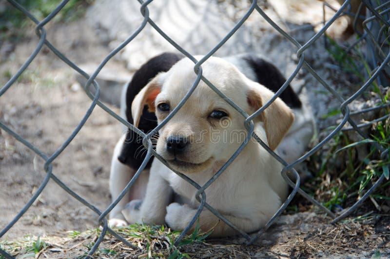 Puppy in Dierlijke Schuilplaats stock foto