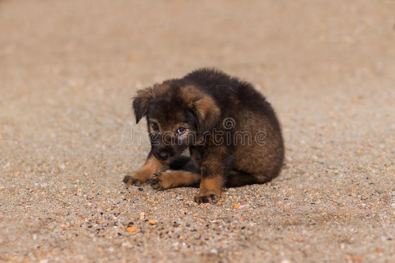 Puppy dog. royalty free stock photography