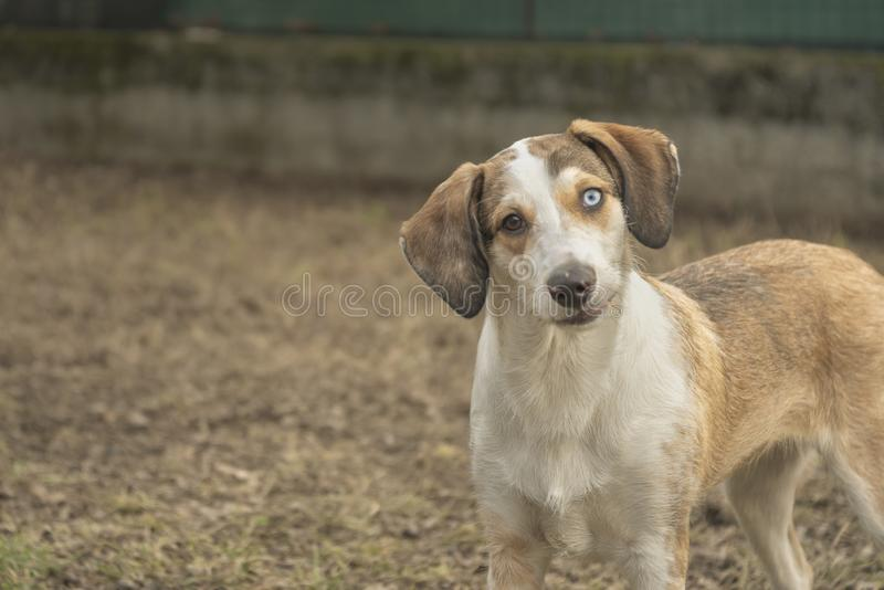 Puppy dog face funny expression royalty free stock photography