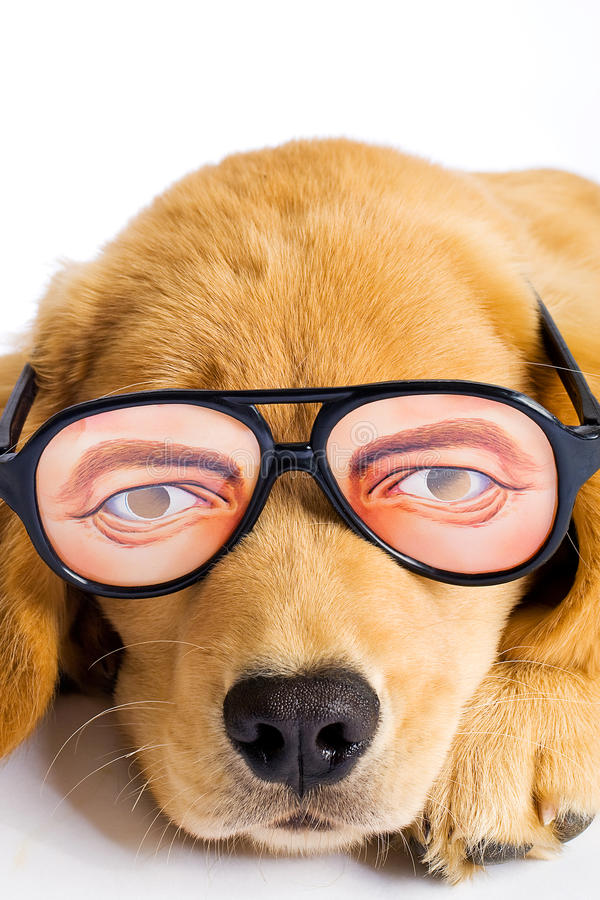 Download Puppy Dog With Funny Glasses Stock Image - Image: 20917073