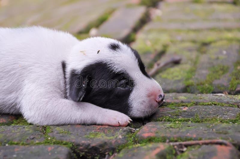 A puppy dog 001 stock photos