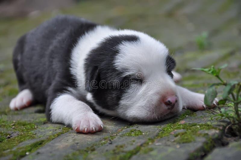 A puppy dog 003 royalty free stock photos