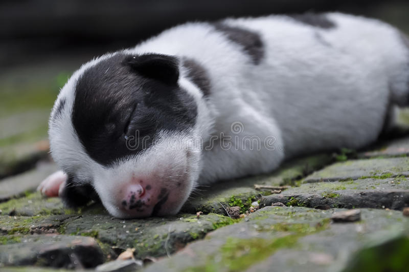 A puppy dog 002 royalty free stock photo